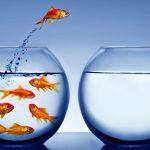Spotting opportunities for change